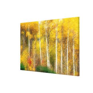 NA, USA, Washington, Fall Aspen Trees along Canvas Print
