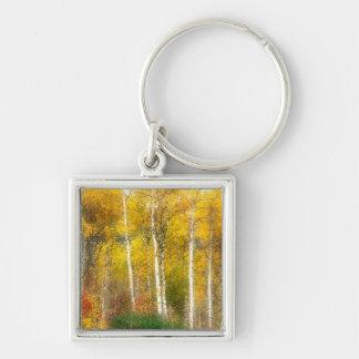 NA, USA, Washington, Fall Aspen Trees along Keychain