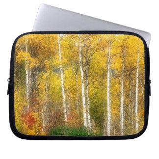 NA, USA, Washington, Fall Aspen Trees along Laptop Sleeve
