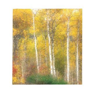 NA, USA, Washington, Fall Aspen Trees along Notepad