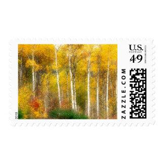 NA, USA, Washington, Fall Aspen Trees along Postage