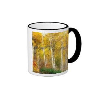 NA, USA, Washington, Fall Aspen Trees along Ringer Mug