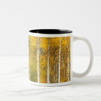 NA, USA, Washington, Fall Aspen Trees along Two-Tone Coffee Mug