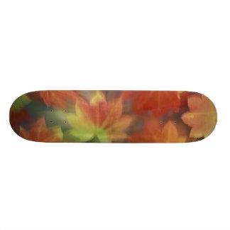NA, USA, Washington, Issaquah, Vine maple Skateboard Deck