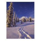 NA, USA, Washington, Mt. Rainier NP, Snowshoe Postcard