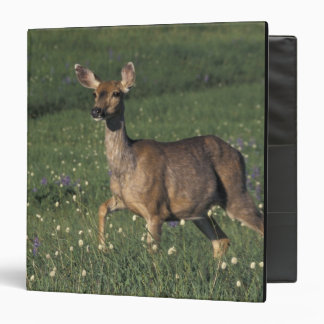 NA, USA, Washington, Olympic NP, Mule deer doe 2 Binder