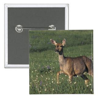 NA, USA, Washington, Olympic NP, Mule deer doe 2 Button