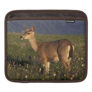 NA, USA, Washington, Olympic NP, Mule deer doe iPad Sleeves