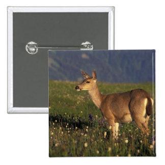 NA, USA, Washington, Olympic NP, Mule deer doe Pinback Button