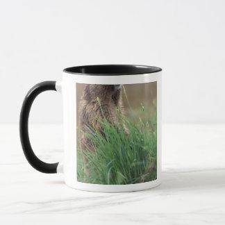 NA, USA, Washington, Olympic NP, Olympic 2 Mug