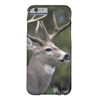 NA, USA, Washington State, White-tailed deer, Barely There iPhone 6 Case