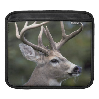NA, USA, Washington State, White-tailed deer, iPad Sleeve