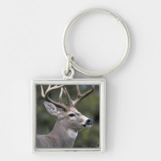 NA, USA, Washington State, White-tailed deer, Silver-Colored Square Keychain