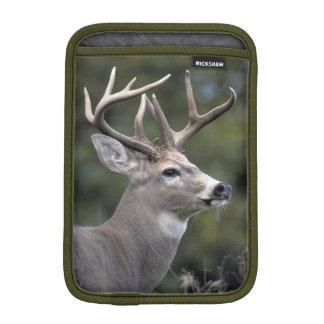 NA, USA, Washington State, White-tailed deer, Sleeve For iPad Mini