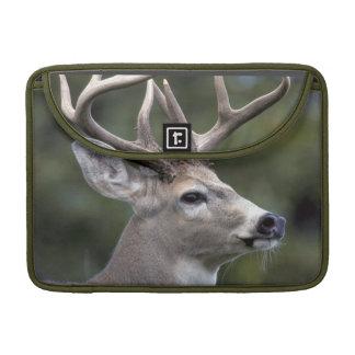 NA, USA, Washington State, White-tailed deer, Sleeve For MacBook Pro