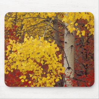 NA, USA, Washington, Wenatchee National Forest. Mouse Pad
