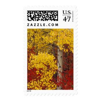 NA, USA, Washington, Wenatchee National Forest. Postage