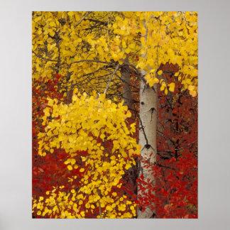 NA, USA, Washington, Wenatchee National Forest. Poster