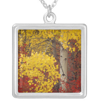NA, USA, Washington, Wenatchee National Forest. Silver Plated Necklace