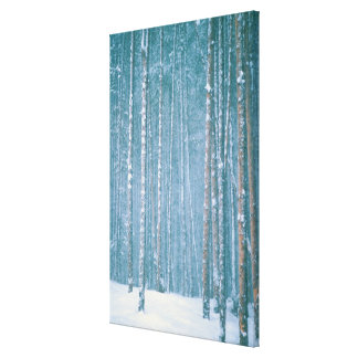 NA, USA, WY. Snowy winter scene among Stretched Canvas Print