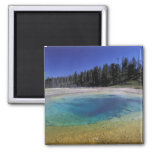 NA, USA, Wyoming, Yellowstone National Park. 2 2 Inch Square Magnet