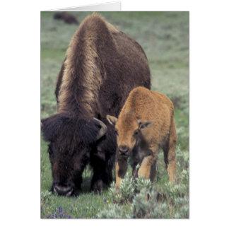 NA, USA, Wyoming, Yellowstone National Park. Card