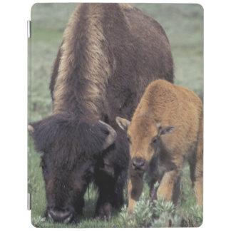 NA, USA, Wyoming, Yellowstone National Park. iPad Cover