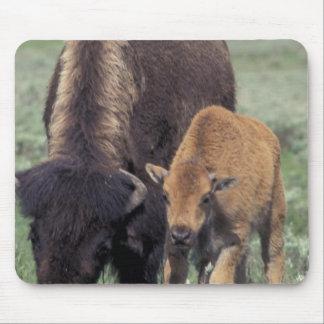 NA, USA, Wyoming, Yellowstone National Park. Mouse Pad