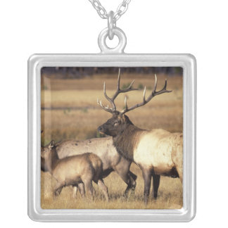NA, USA, Wyoming, Yellowstone National Park. Jewelry