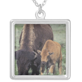 NA, USA, Wyoming, Yellowstone National Park. Necklaces