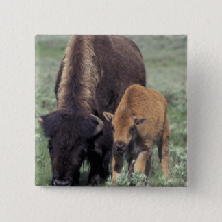 NA, USA, Wyoming, Yellowstone National Park. Pinback Button