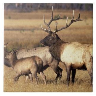 NA, USA, Wyoming, Yellowstone National Park. Ceramic Tiles