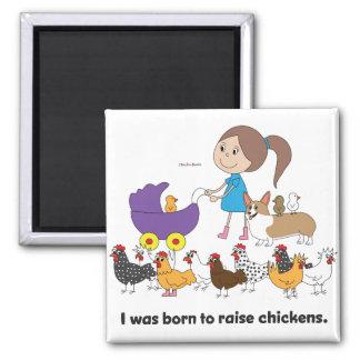 Nací aumentar el imán de los pollos