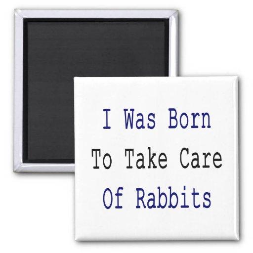 Nací tomar el cuidado de conejos iman