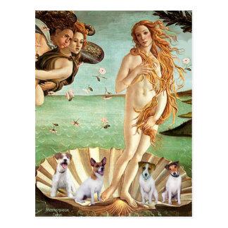 Nacimiento de Jack Russells (cuatro) - de Venus Postal