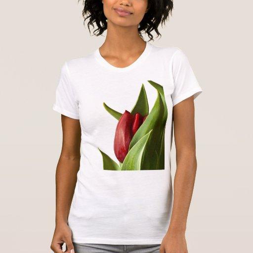 Nacimiento de un tulipán del rojo de la primavera playera