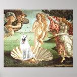Nacimiento del pastor alemán Venus-Blanco Poster