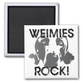 Nación de Weimaraner: ¡ROCA de Weimies! Imán Cuadrado