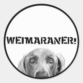 Nación de Weimaraner: Weimaraner en una caja Pegatina Redonda