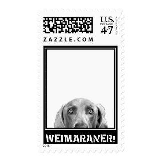 Nación de Weimaraner: ¡Weimaraner en una caja! Sello Postal