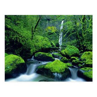 Nacional 2 de los E.E.U.U., Oregon, garganta del Tarjetas Postales