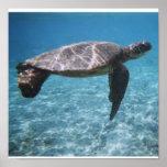 Nadada con el poster de la tortuga