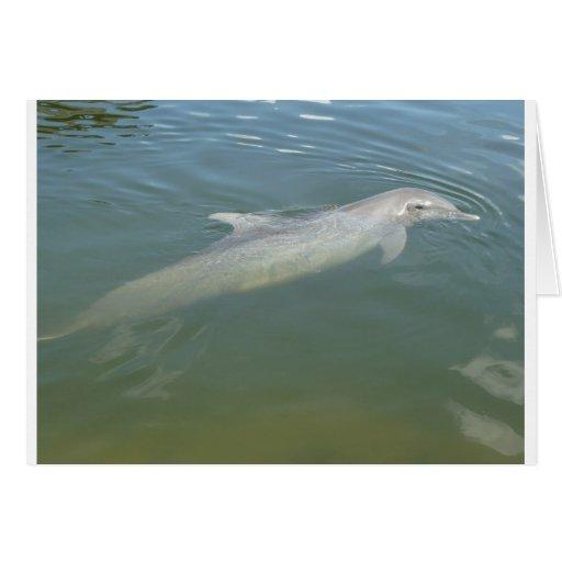 Nadada del delfín felicitación