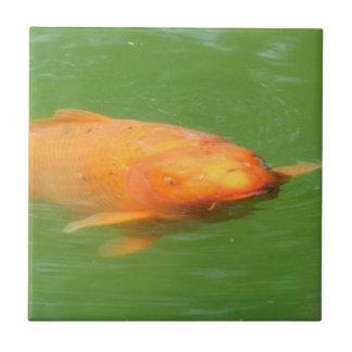 Nadada en mí Bro Koi gruñón Azulejo Cuadrado Pequeño