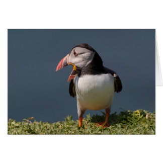 Nagging Puffin Card