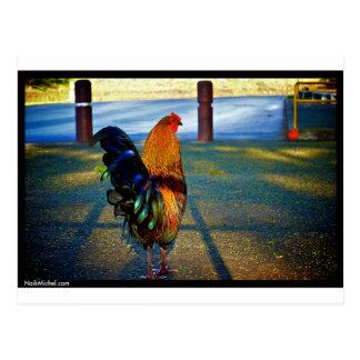 Naik Michel Photography Hawaii 015 Post Cards