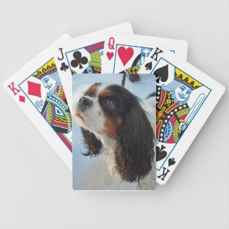 Naipes arrogantes Tri Coloreados del perro de agua Barajas De Cartas