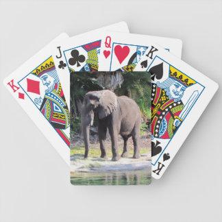 Naipes del elefante barajas de cartas