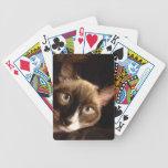 Naipes del gato siamés baraja cartas de poker