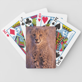 Naipes del guepardo del bebé cartas de juego